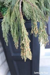 Decorate an Urn with Fresh Cedar