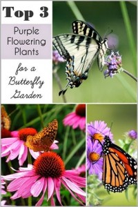 My Top 3 Purple Flowering Plants for a Butterfly Garden