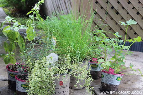 How to plant an outdoor herb garden pot - it's easy!