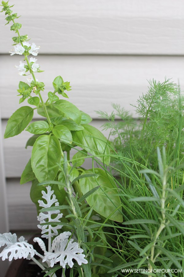 how-to-plant-herb-garden