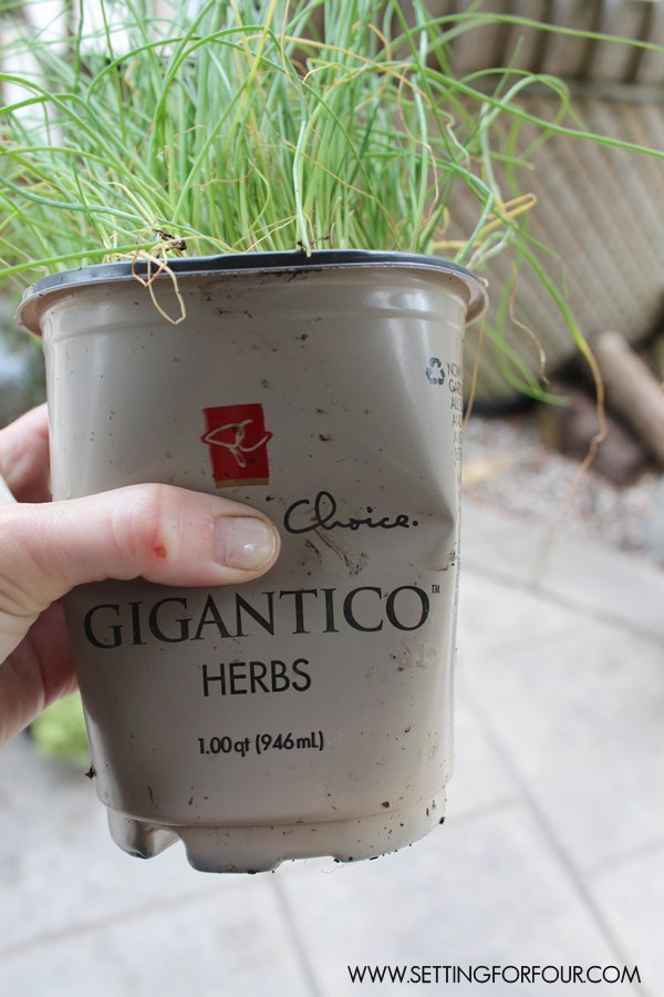 How to plant an outdoor herb garden - it's easy!