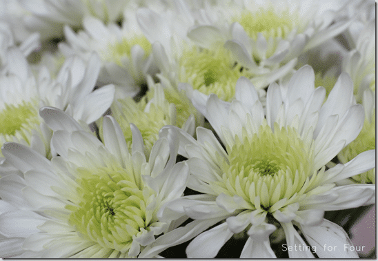 White Mums from Setting for Four. #mums #flowers