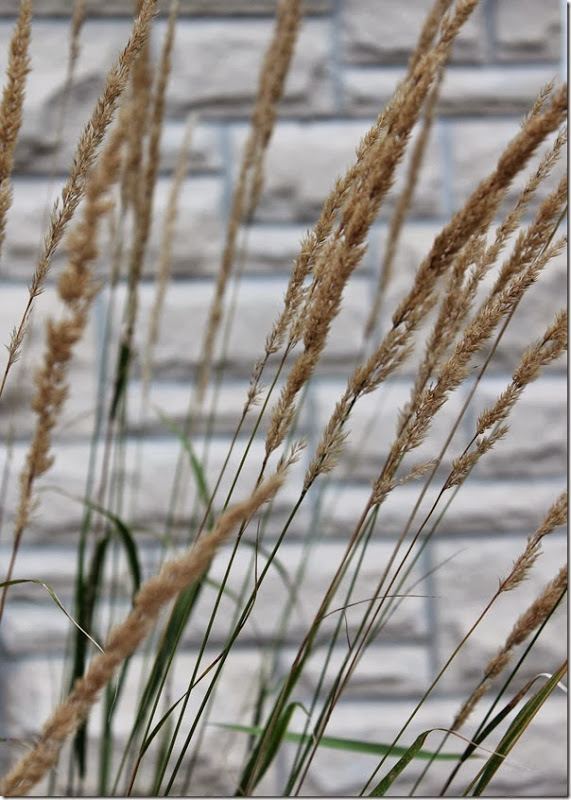 Ornamental Grass Front Garden Setting for Four