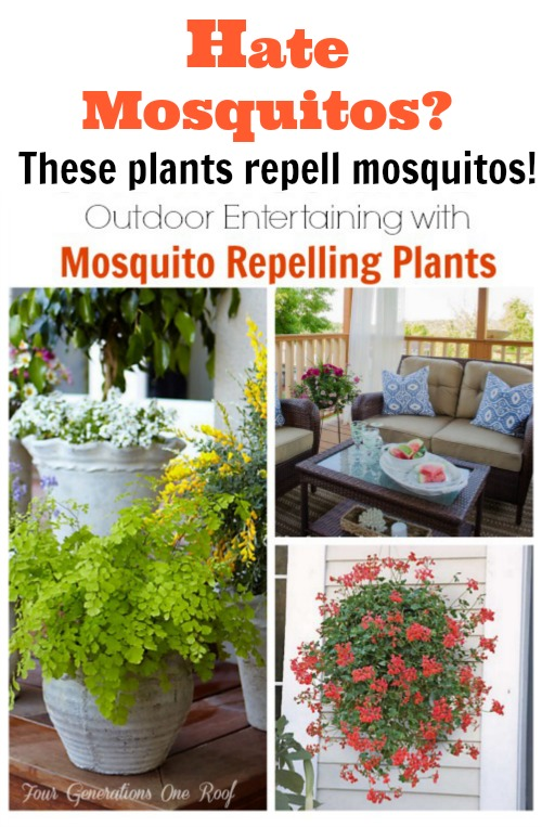 How to entertain outdoors with mosquito repelling plants.