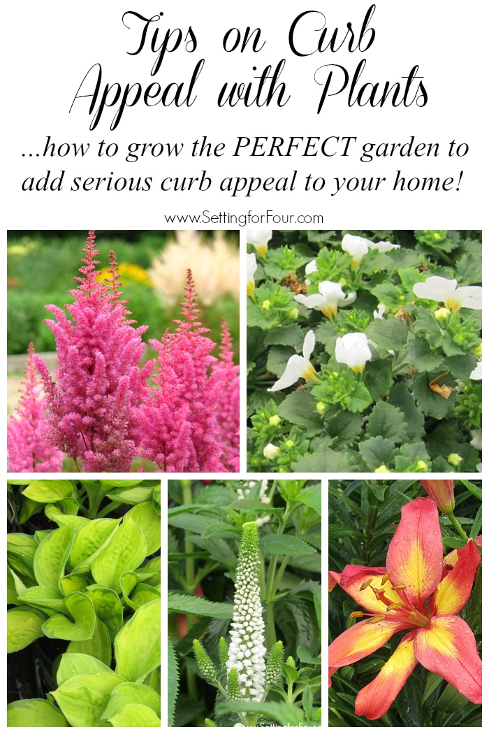 How to grow the PERFECT colorful, easy care garden to add some dramatic curb appea!