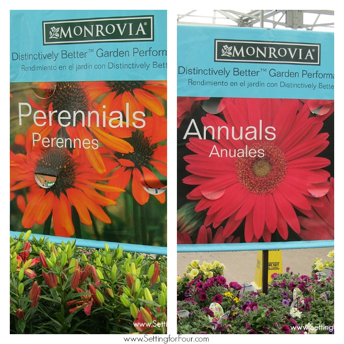 Find beautiful and hardy Monrovia perrenial and annual plants at Lowes stores for all of your gardening needs! See more gardening tips at www.settingforfour.com