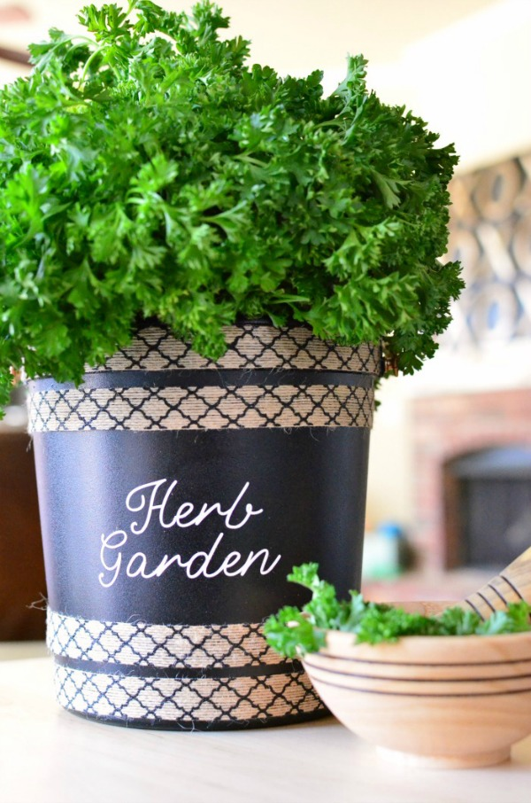 Upcycled popcorn bucket to herb garden!