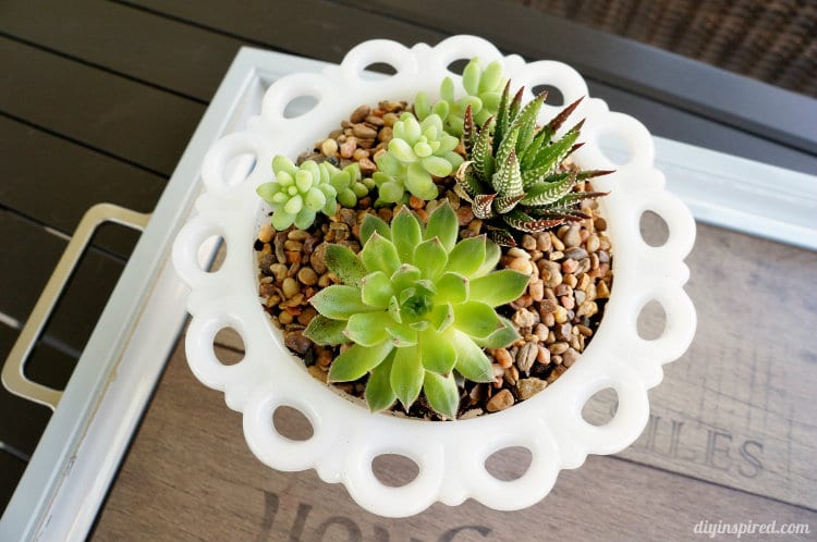 Milk Glass Thrift Store Planter idea.