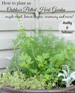 How to Plant an Outdoor Herb Garden Pot