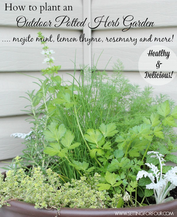 DIY outdoor herb garden pot.