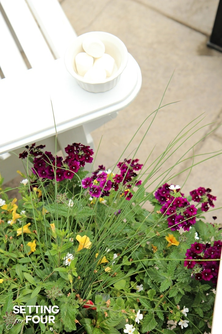 Summer flowers and container gardening.