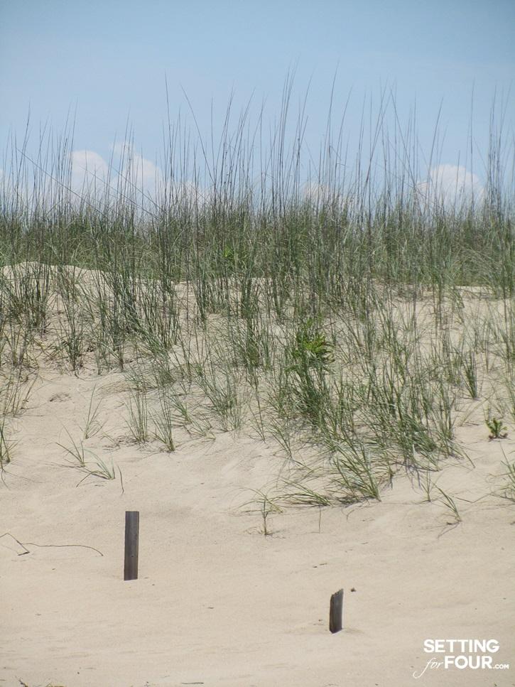 Virginia Beach sand dunes