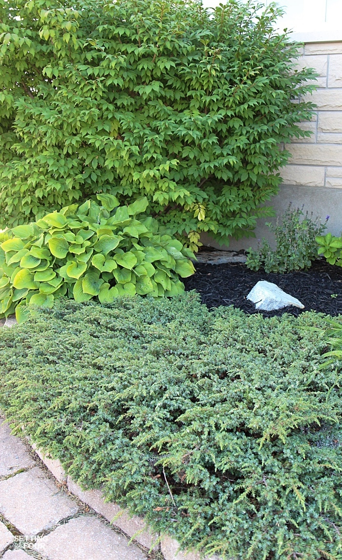 See how our front flower beds add curb appeal and beauty to our home!