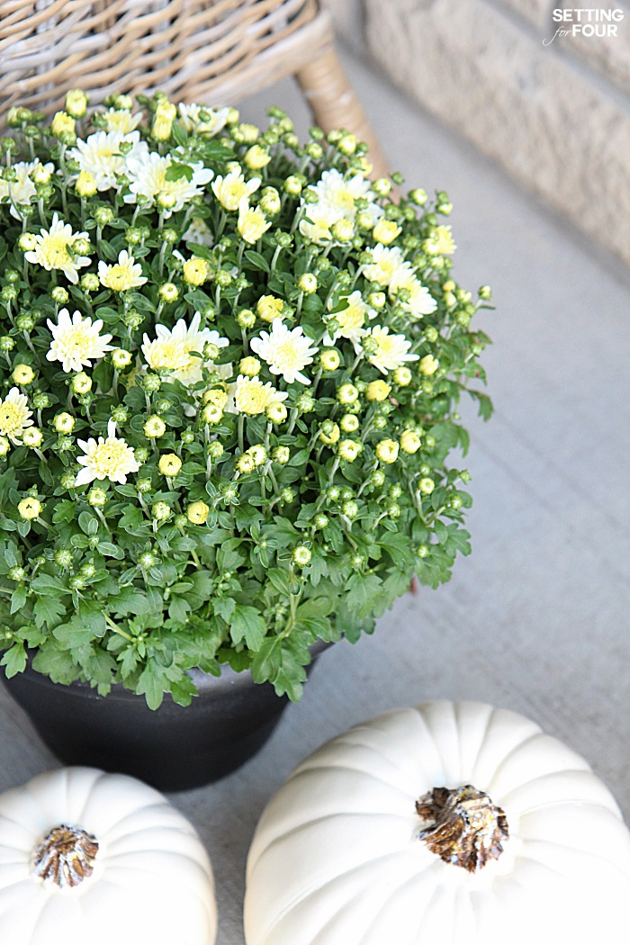 Welcome to my Fall Home Tour Part 2 - my Fall Front Porch! See my Fall white mum potted flowers.