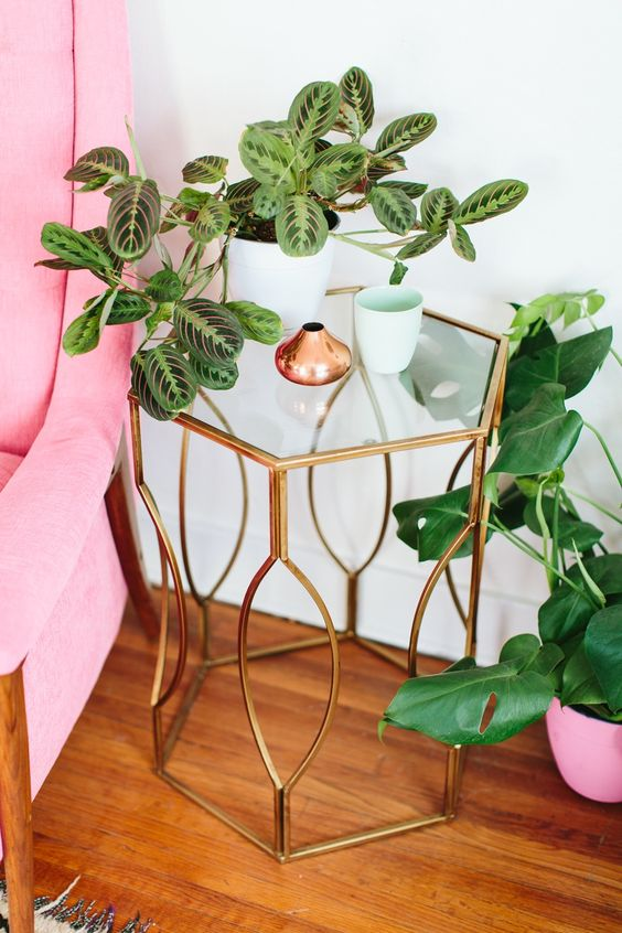 Patterned plants like this prayer plant are hot trend right now! Look for tropical plants that have striped or dotted leaves to update your home decor in a jiffy!