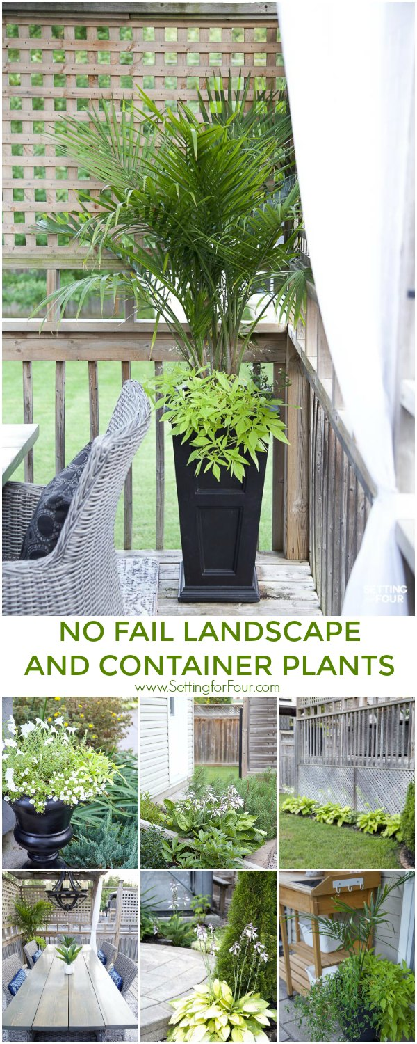No fail landscape and container plants! Ideas for containers, urns, plant types and flower types that are easy to care for.