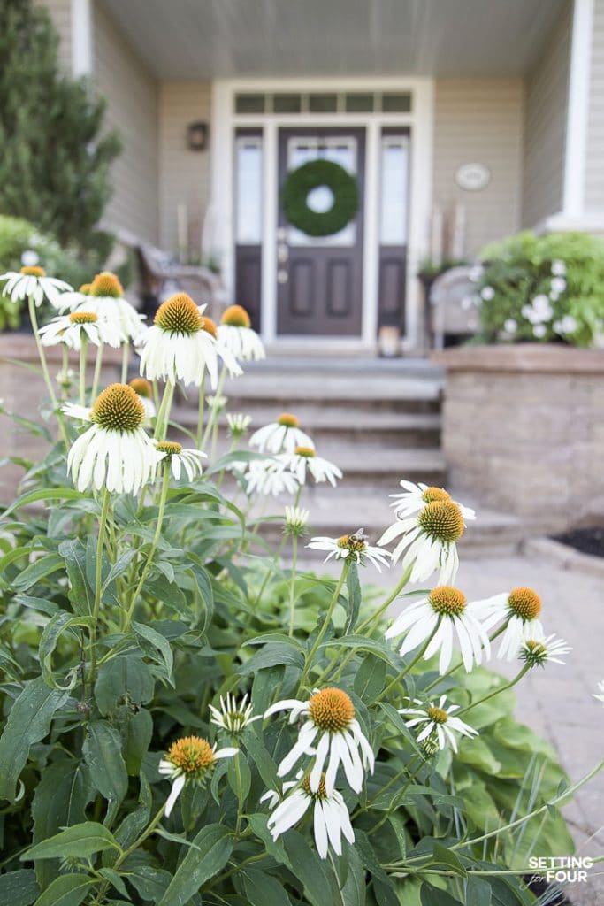 Summer Front Porch Decor Ideas #summer #porch #plants #exterior #curbappeal #decorating #landscaping #coneflower #perennial