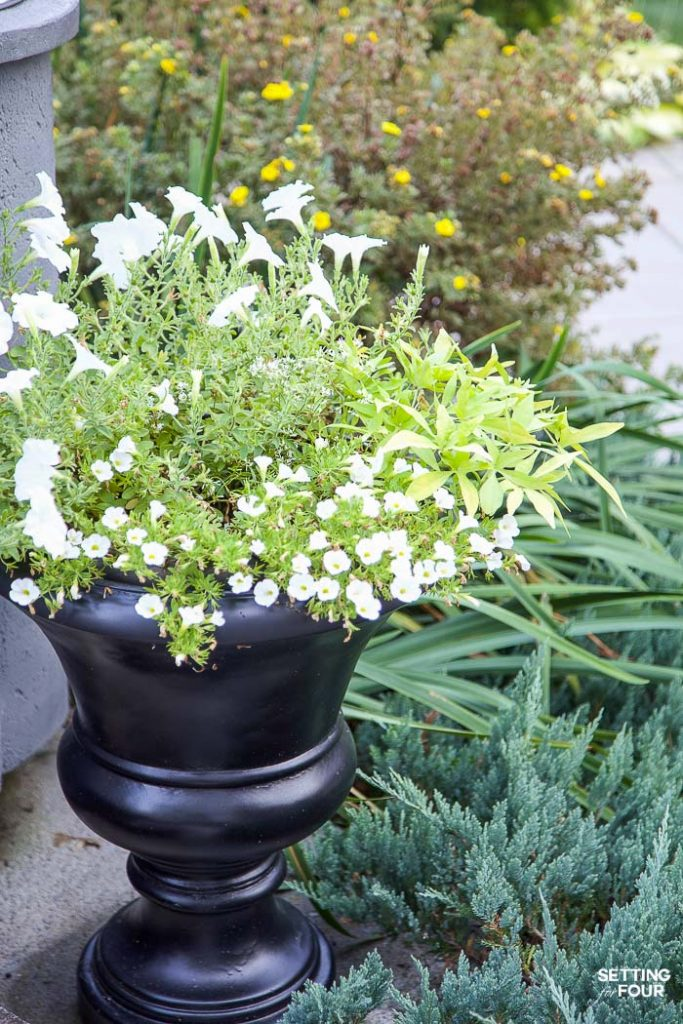 No Fail Plants - Landscape Gardens & Flower Containers #landscaping #gardening #plants #flowers #containerplants #urns #greenery #hosta #palmtree