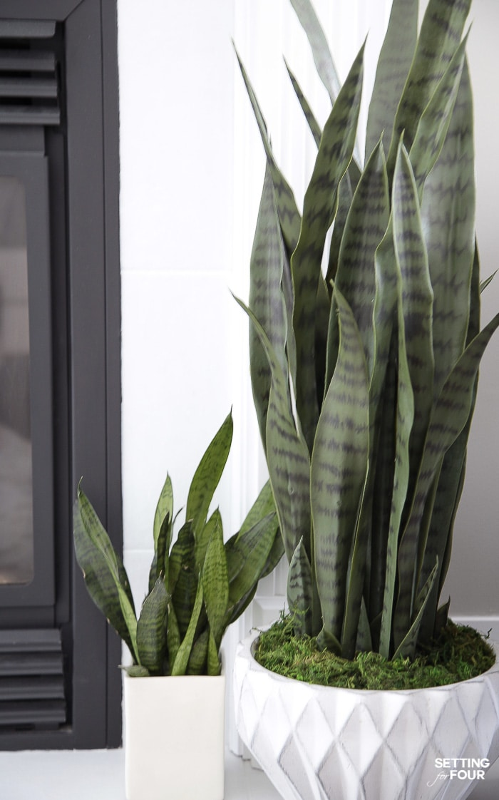 Living Room Makeover and decor ideas! Love my snakeplants! #plants #snakeplant #planter #indoorplants #houseplantslowlight #pottedplants #decor