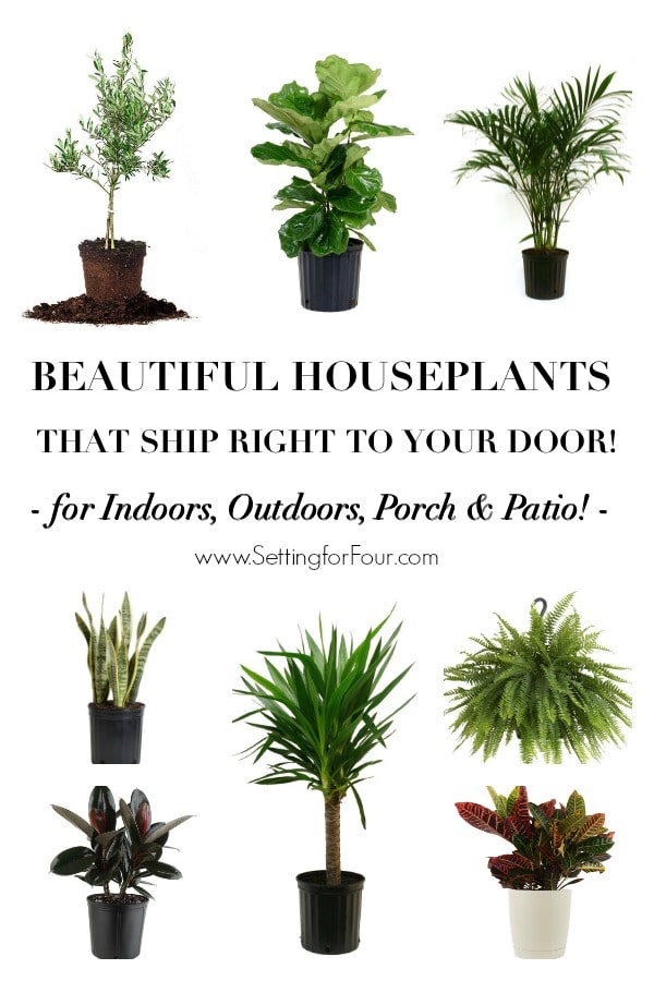 Beautiful houseplants that ship right to your door! Indoors, Outdoors, Porch & Patio! #decor #outside #outdoorliving #plants #houseplants #home #decorideas