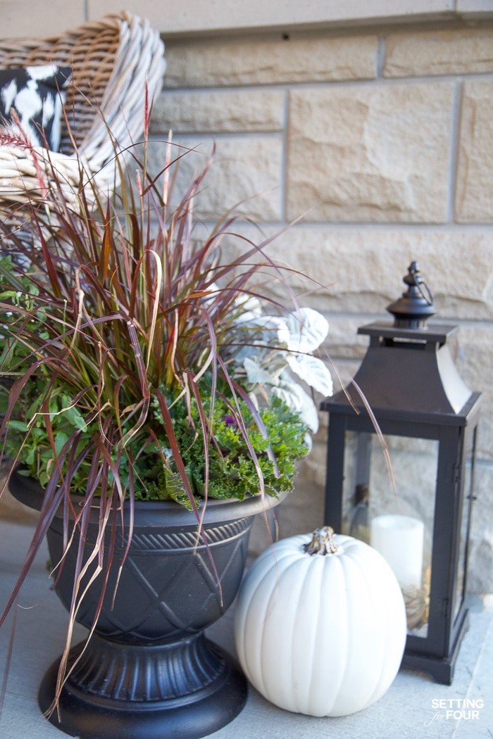 Fall planter filled with purple fountain grass, ornamental cabbage and lambs ears.
