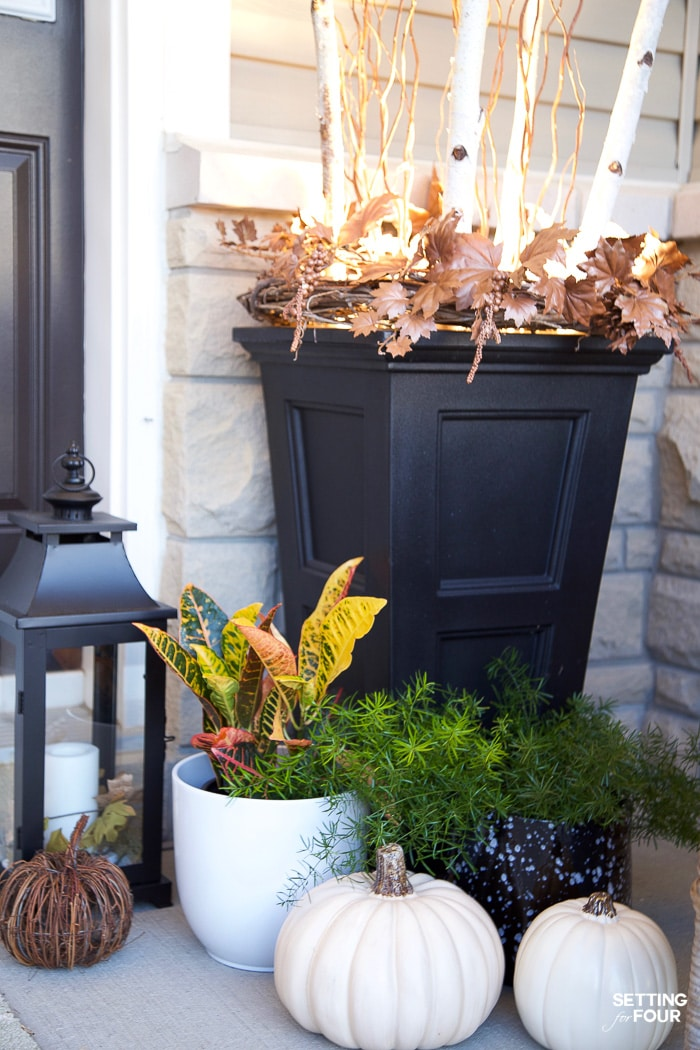 Fall planter filled with curly willow, birch branches with outdoor lighting using a spot light.